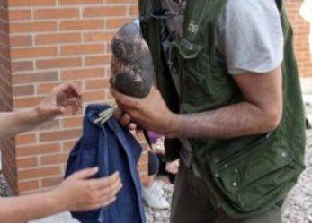 Nacen en una azotea de Leganés cuatro ejemplares de halcón peregrino