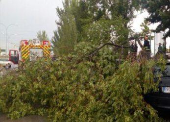 Bomberos, Policía Local y Protección Civil efectuaron más de 50 salidas debido al temporal de lluvia y viento en la ciudad