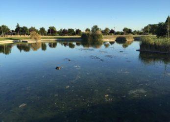 Amanece con todos los patos muertos en el Parque de la Hispanidad