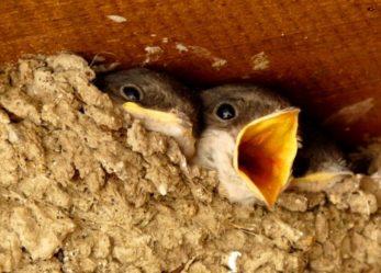 Lanzamos una nueva app para registrar colonias de aves urbanas