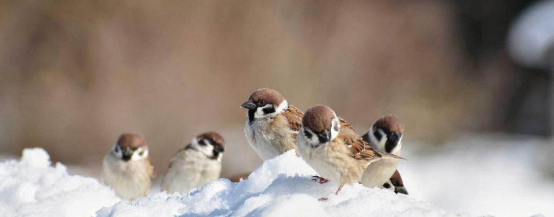 Cómo ayudar a las aves durante una ola de frío