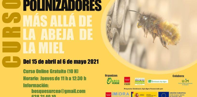Curso: Polinizadores más allá de la abeja de la miel